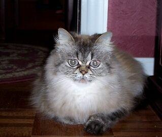 THE SASSY CAT'S MEOW