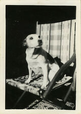 PHOTO ANCIENNE - VINTAGE SNAPSHOT - ANIMAL CHIEN CHAISE LUMIÈRE - DOG LIGHT