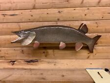 Ron Lax Reproduction Mount Musky Northern Pike Walleye Muskey Fish Taxidermy Fm4