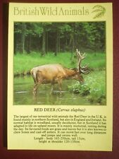 POSTCARD E2-15 ANIMALS RED DEER BRITISH WILD ANIMALS