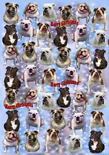 Bulldog Christmas Wrapping Paper By Starprint