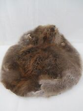 Fine Beaver Pelt - Hide  20 by 22 inches