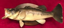Vintage Mid Century Taxidermy Large Wide Mouth Bass Fish • Wood Mounted