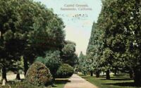 Capitol Grounds Sacramento California CA Walkway Path Vintage 1900's Postcard
