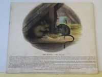 Vintage Print,MOUSE,Society Christian Knowledge,c1857