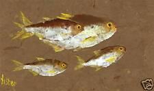 """Gyotaku Fish Rubbing - """"Glitter Bait"""" - Shad"""