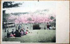 1905 Postcard: Cherry Blossom - Asukayama Oji, Tokyo, Japan