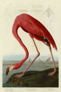 American Flamingo John James Audubon Wildlife Bird Nature Print Poster 24x16