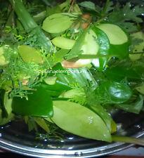 Saint Lazarus Herbs for Spiritual Bath - Hierbas de San Lazaro