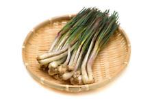 jac rare plants - allium chinensis -- chinese chive or japanese rakkyo plant
