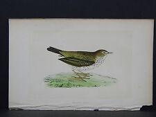 Rev. F. O. Morris, Birds, S4#30 Meadow Pipit