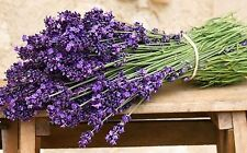 Rare Organic Herb seeds Lavender (Lavandula officinalis) Lavanda - 50 seeds.