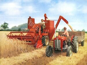 Massey Ferguson 780s Harvester & Vintage Tractor At Work Poster (A3)