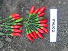 HOT CHILLI PEPPER BIRD EYE ITALICO 60 SEEDS