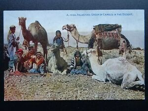 ?Palestine Judea CAMELS IN THE DESERT c1930 Postcard by Photochrom