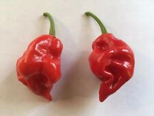 20 NAGA VIPER PEPPER SEED - EXTREME HEAT - 2018  5TH HOTTEST PEPPER IN THE WORLD