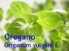 ***Oreganoöl, Origanumöl (Origanum vulgare L.) 10ml, naturrein - Topp-Qualität!!