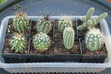Echinocereus / Escobaria  8 Pflanzen, Winterharte Frostharte Kakteen,Kaktus,