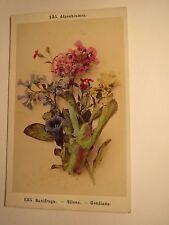 Alpenblumen - Saxifraga - Silene - Gentiana - Pflanze / CDV