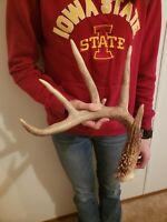 Wild Whitetail Deer Antler Shed Horn Rack Decor Craft 5 Point IA Dark