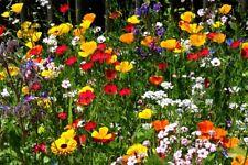"""Blumenwiese Mix Saat """" Sommerblumen """" 200 Samen für duftende Blumen"""