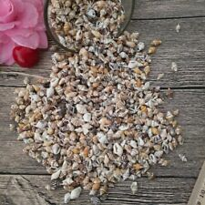 50Pcs Small Home Toys Decoration Material Natural Craft Seashell Aquarium