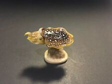 Rare Kaiyodo Epoch Japan Exclusive Deep Sea Broad Club Cuttlefish Fish Figure