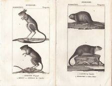 1816 Three Antique Engravings - Canadian Beaver, Mole & Gerbil - Pierre Turpin