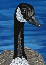ACEO ATC Original Canada Goose Wildlife Bird Art Miniature Painting -Carla Smale