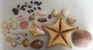 Lovely Collection Of Shells And Stones VGC