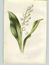 1880 Chromolithograph Lily of The Valley White Flower Botanical Print & 4 PG Bio