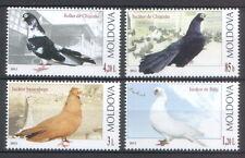 "Moldova 2012 Birds ""Pigeons"" 4 MNH stamps"