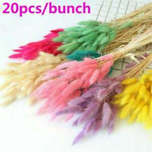 Wholesale Multicolour Dried Pampas Grass Reed Home Wedding Flower Bunch Decor US