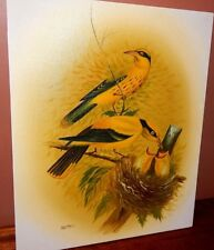 "John Audubon, style of painting. Original Signed Oil Painting. 17"" X 21"""