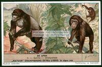 Chimpanzee And Gorilla Monkey Primate Ape 60+ Y/O Trade Ad Card