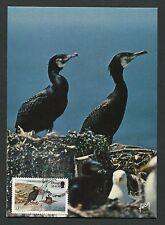 ISLE OF MAN MK VÖGEL KORMORAN BIRDS MAXIMUMKARTE CARTE MAXIMUM CARD MC CM c9295