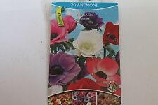 20 Blumenzwiebeln,Anemonen,De Caen,Mischung#BZ5