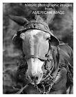 Walker Evans Photo Of Mule's Head   (985)