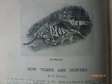 Tiger Hunting Tigers Hunted India Africa Camera Photography Rare Victorian 1898