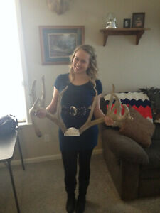 """225"""" Whitetail Deer Antlers Taxidermy (Repoduction)"""