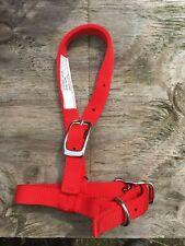 """Bmb Red 3/4"""" nylon Sheep / goat halter"""