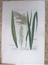 "Vintage Engraving,ARUNDO DONAX,C.1740,WEINMANN,Botanical,20x13.5"",Mezzotint"