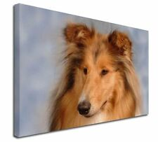 """Rough Collie Dog 30""""x20"""" Wall Art Canvas, Extra Large Picture Prin, AD-RC1-C3020"""