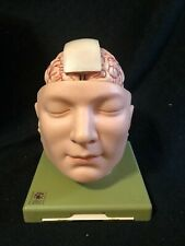 Somso BS5/1 Base of Head and Brain 10 Part Anatomical Model