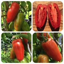 Striped Roman gelb-rot gestreifte Flaschentomate seltene Tomate