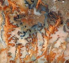 Graveyard Point Plume Agate 50 lb faced rough Museum piece beauty!!