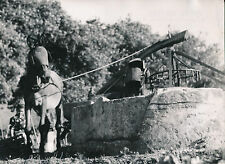 PORTUGAL c. 1950 - Cheval  Noria  Nazaré - DIV 9208