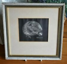 Small Framed Vole Animal Picture