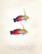 Ocean sea FIREFISH GOBY FISH original handworked limited edition SIGNED print