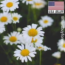 Roman Chamomile 1,000 Seeds Anthemis Nobilis Groundcover Edible LandscapingLawn
